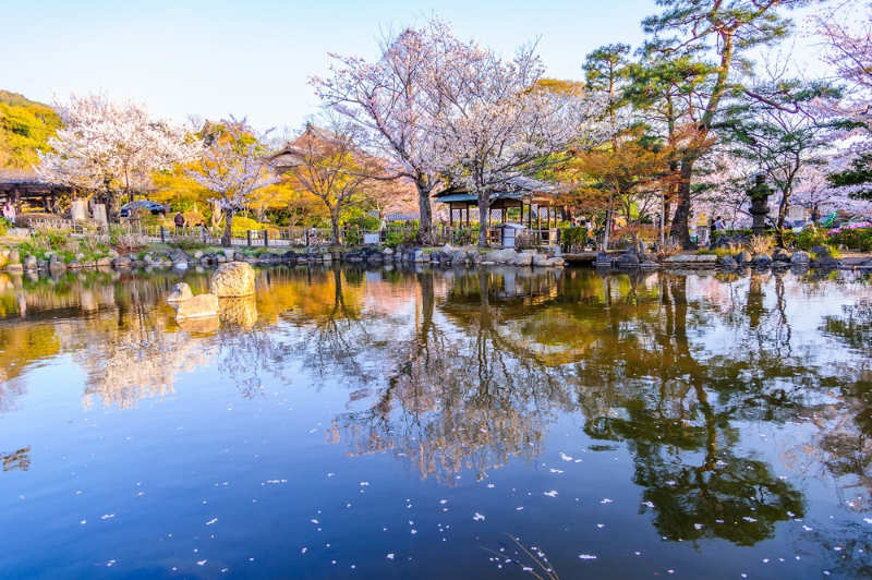 parque Maruyama - que ver en Kioto