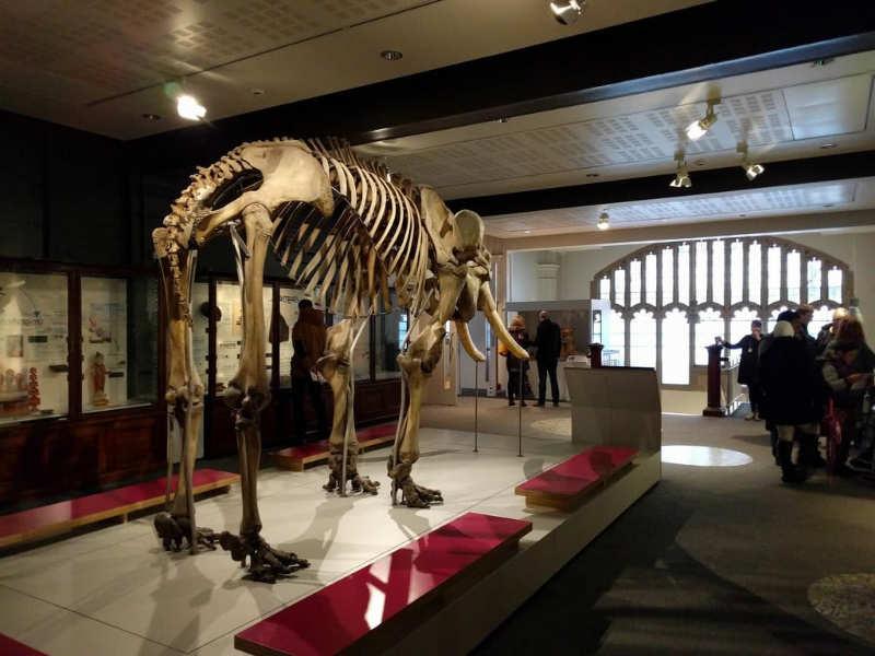 Museo de Manchester