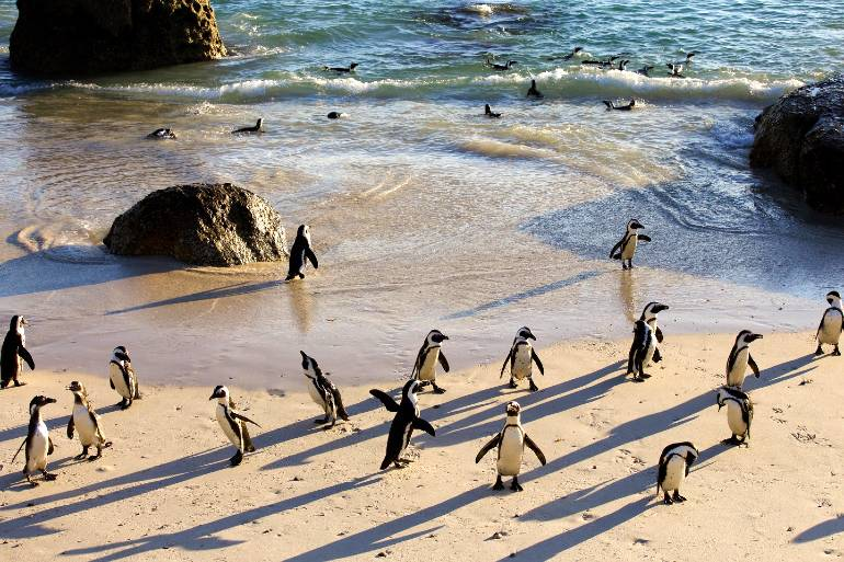 Explora algo de la vida marina y salvaje del Cabo