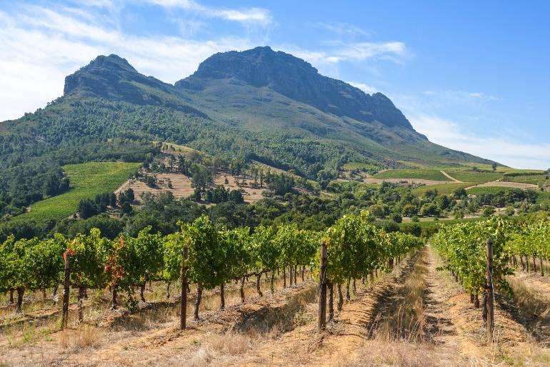 Pruebe los vinos del Cabo en una tranquila finca