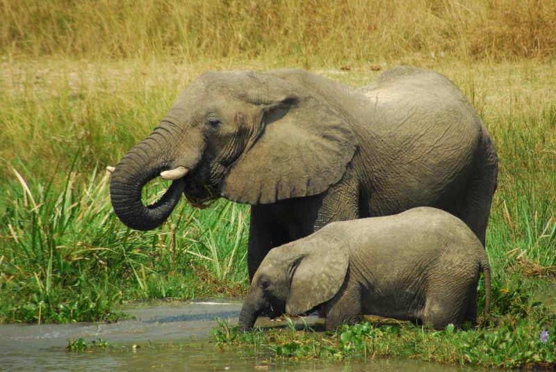 Parque-Nacional-Murchison-Falls-destinos-uganda