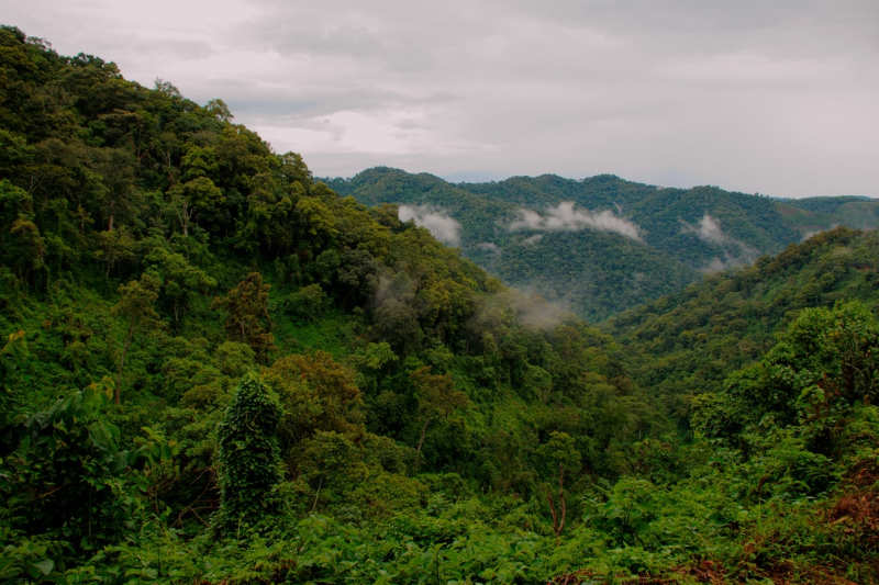 Parque-Nacional-Bwindi-visitar-uganda