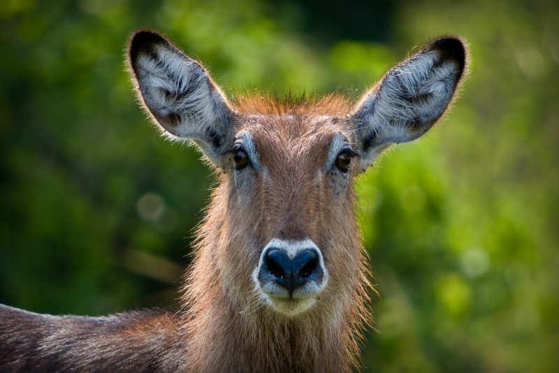 Queen Elizabeth National Park - que ver en uganda