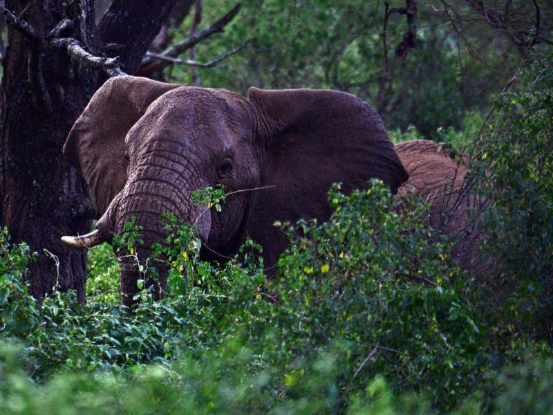 Santuario de elefantes de Babile - visitar etiopia