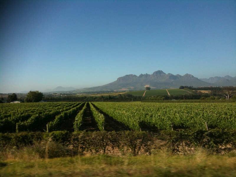 Stellenbosch - que ver en sudafrica