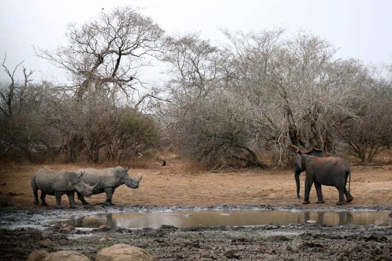 Kruger National Park - que ver en sudafrica