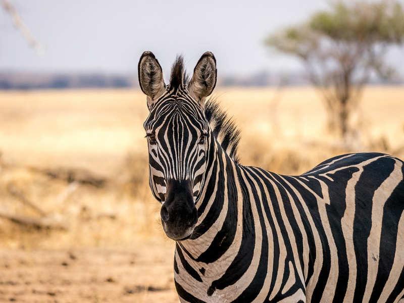 Tarangire National Park - tanzania lugares turisticos