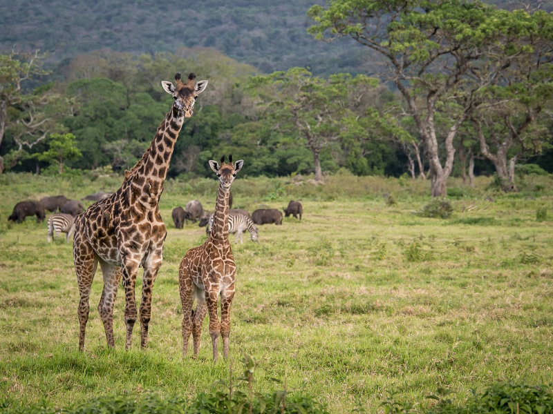Parque Nacional Arusha - que hacer en tanzania