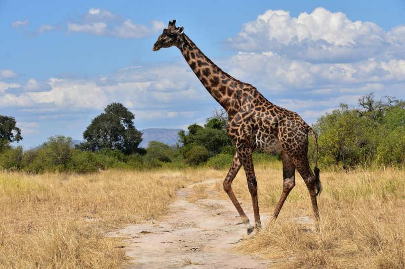 Ruaha-National-Park-tanzania-turismo