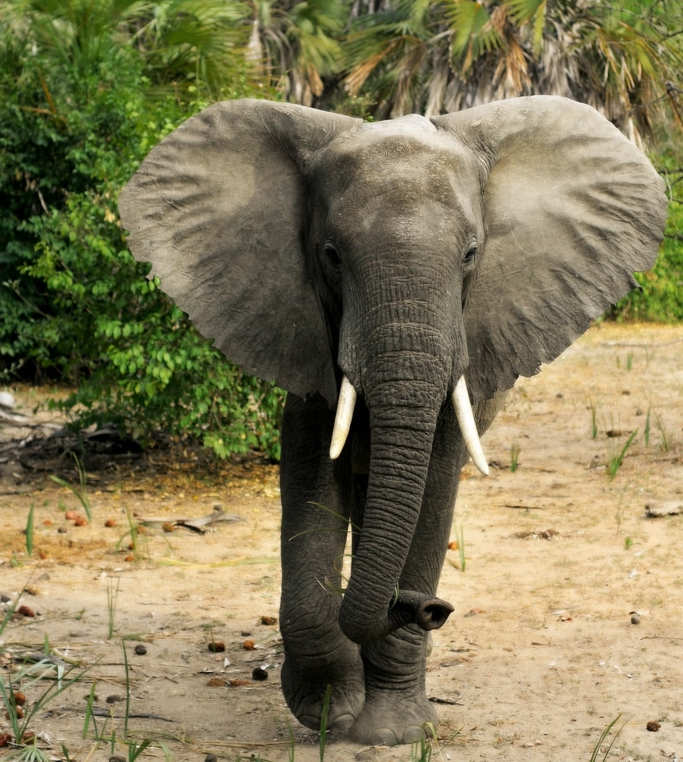 Selous-Game-Reserve-tanzania-turismo