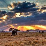 15 Mejores lugares Que Ver en Tanzania