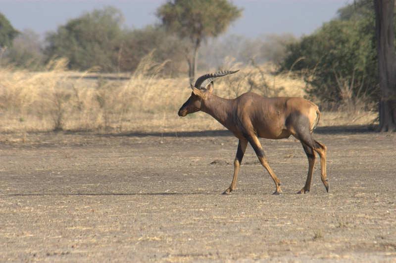 Waza-National-Park-que-ver-en-camerun