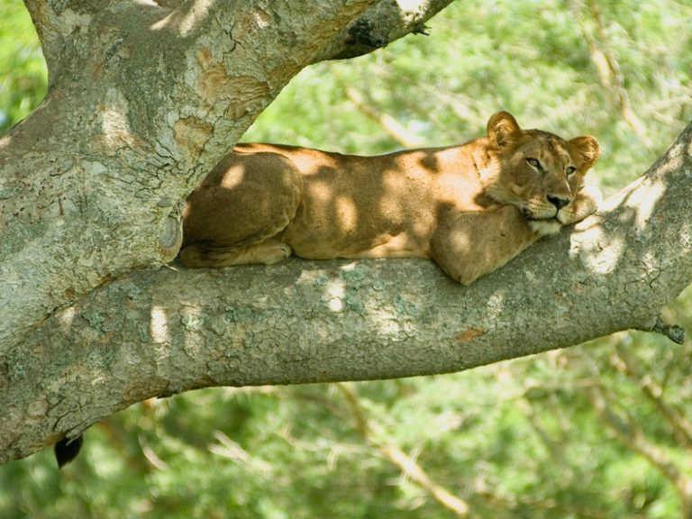 Dja-Faunal-Reserve-sitios-turisticos-de-camerun