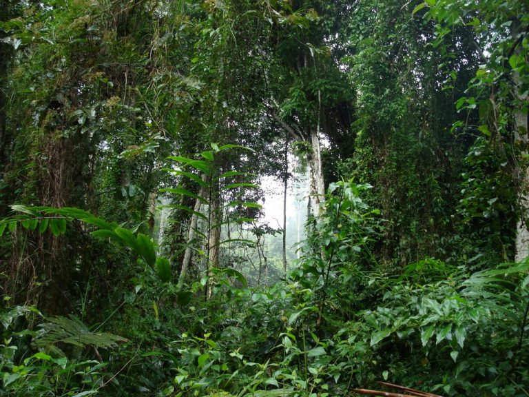 Campo-Ma'an-National-Park-que-ver-en-camerun