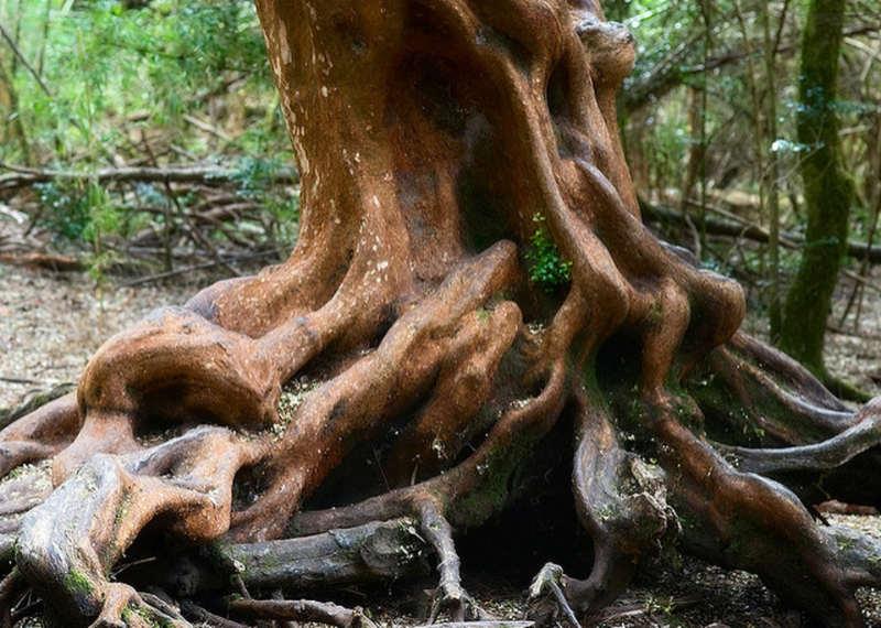 Bosque mirto de bariloche - lugares turisticos argentina
