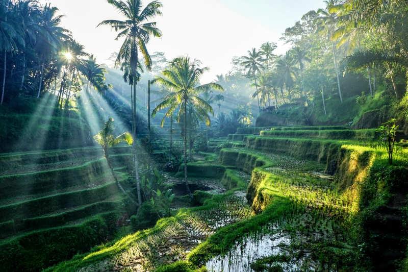 Tours-en-bali-campos-de-arroz-ubud