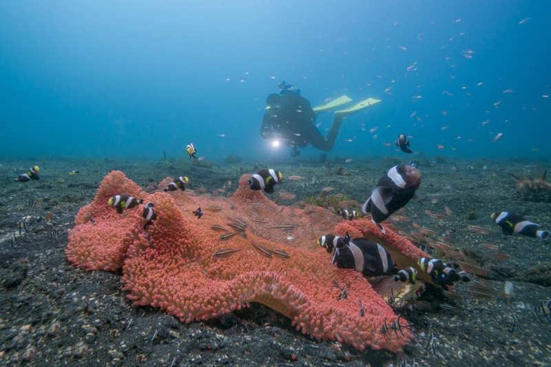 Isla-Lembeh-mejores-islas-de-indonesia