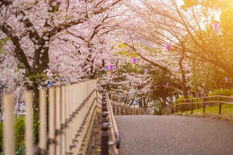 parque de asukayama - que ver y hacer en tokio