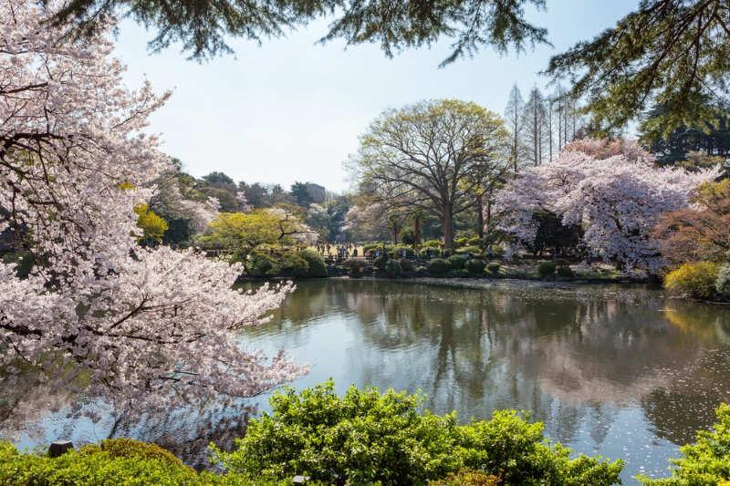 Shinjuku Gyoen National Garden - que ver y hacer en tokio