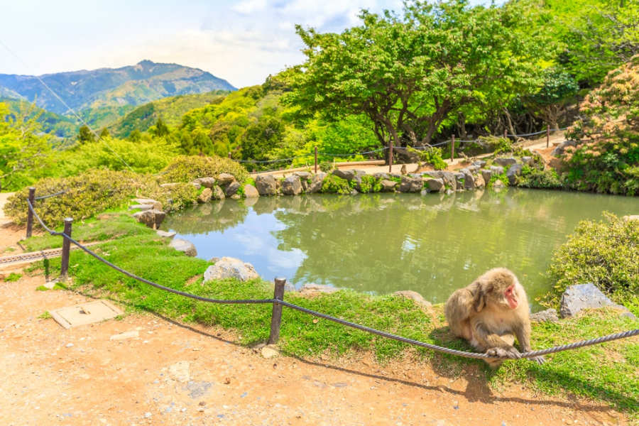 Monkey Park Iwatayama - Kioto que ver