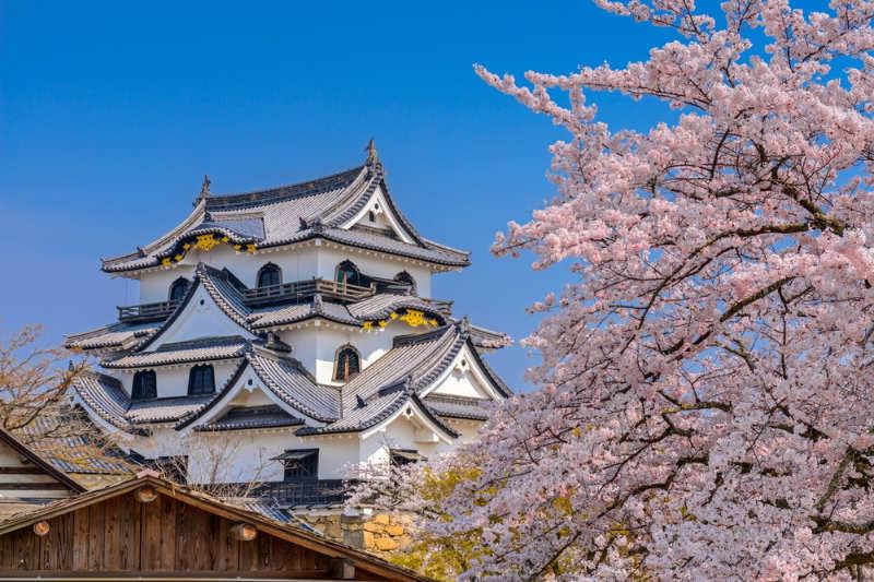 Castillo de hikone - tours en kioto