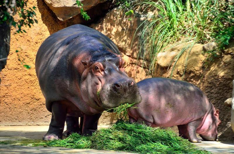 Oji Zoo, Kobe- que hacer en Japon
