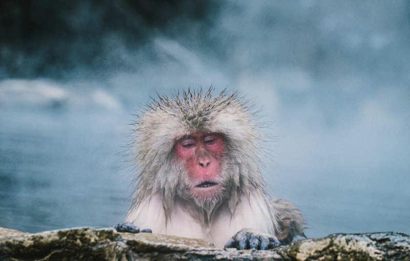 templo de los monos - tours en japon