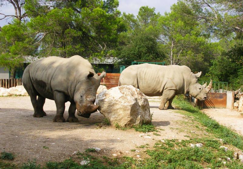 Parc zoologique de Montpellier