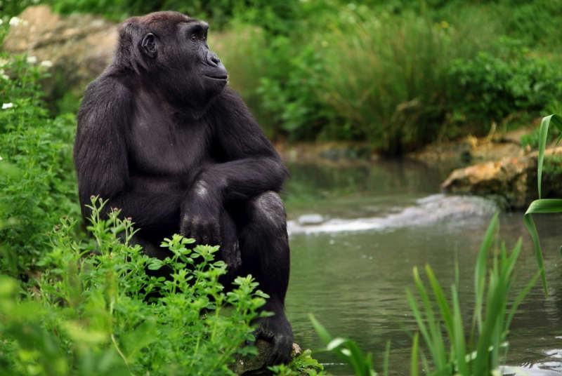 zoológico de Bristol