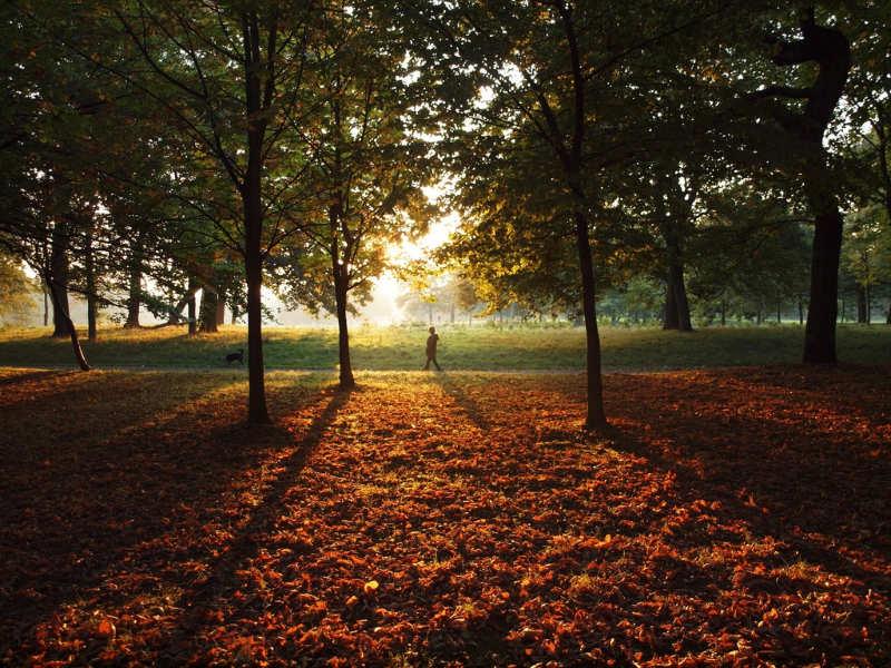 Sefton-Park-Liverpool