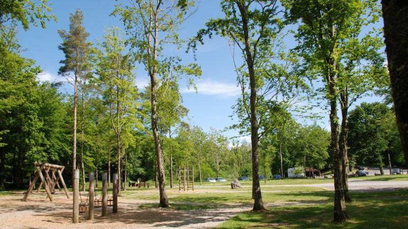 Curraghchase-Forest-Park-que-ver-en-limerick