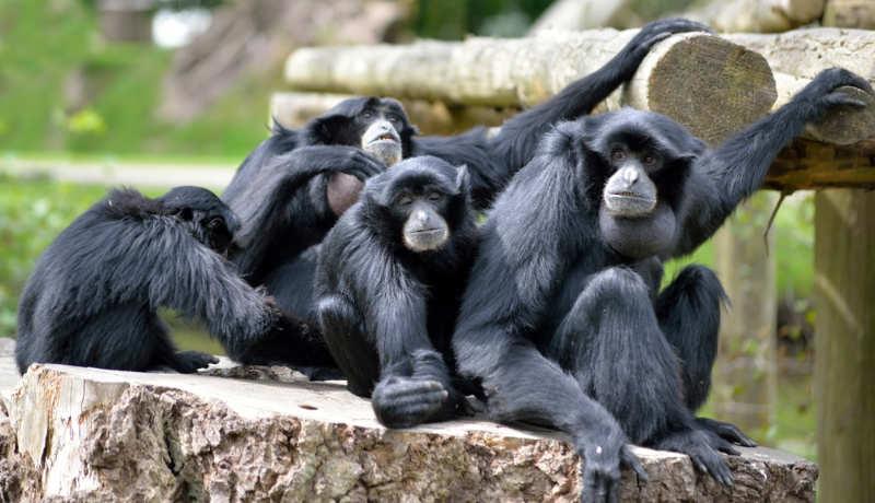 Fota-Wildlife-Park-que-hacer-en-cork