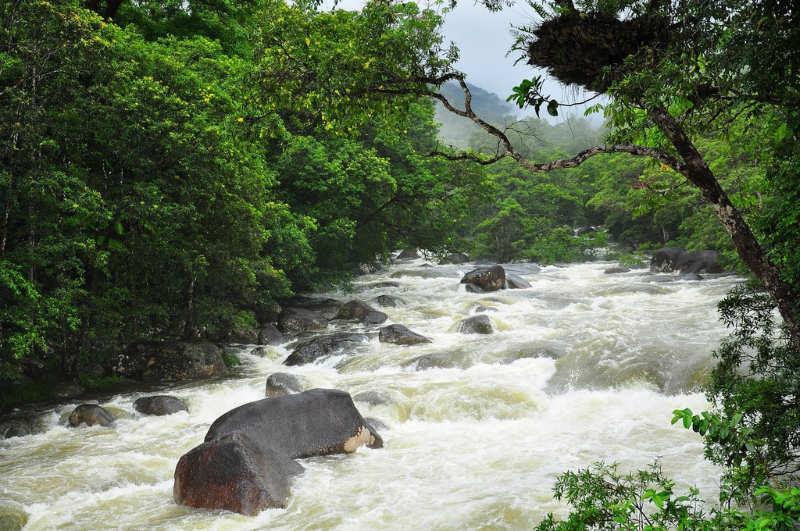Selva tropical de Daintree