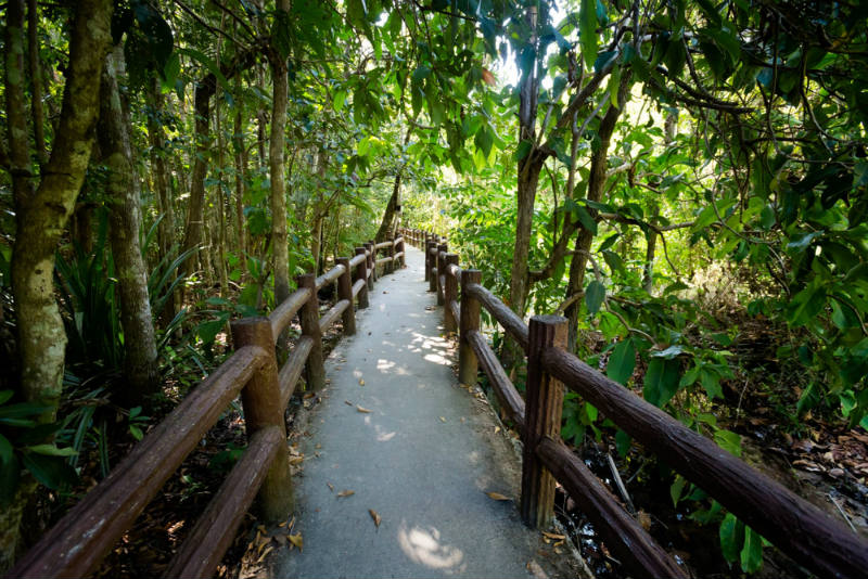 Thung-Teao-Parque-Natural-Forestal