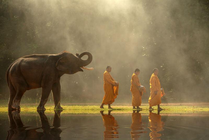 No montar en elefante