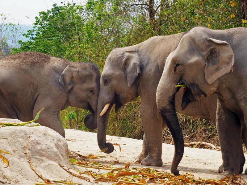 Santuario de Elefantes de Pattaya