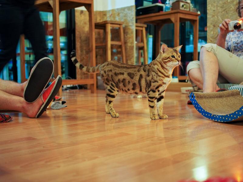 Cat Café (Cafetería de gatos)